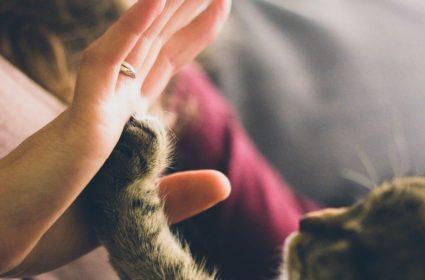 Koronawirus u kotów – jakie są fakty?
