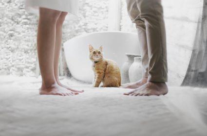 7 rad jak stworzyć dom bardziej bezpieczny dla naszego kota