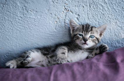 5 prostych kroków, aby posiadanie kota było bardziej eko