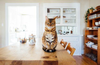 Sucha karma dla kota – jak wybrać najlepszą?