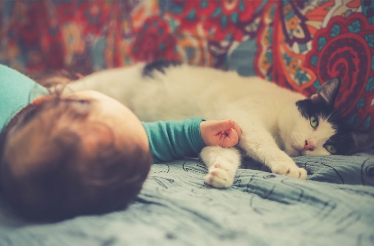Kot i dziecko to dobry pomysł