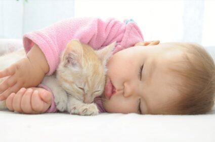 Dziecko i kot, czyli nowy domownik w kocim świecie