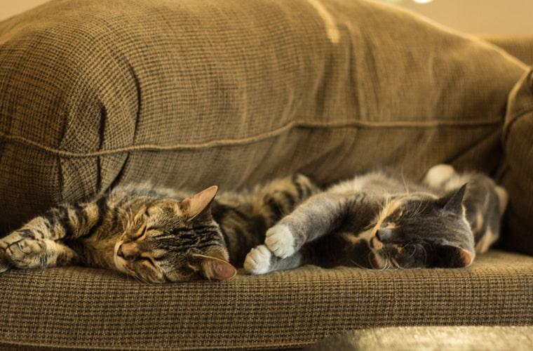 Poprawnie przeprowadzony proces zapoznawania zaowocuje dobrą relacją kotów