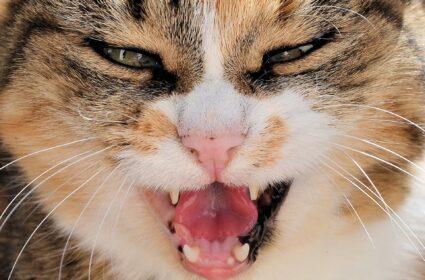 Koty fuczą