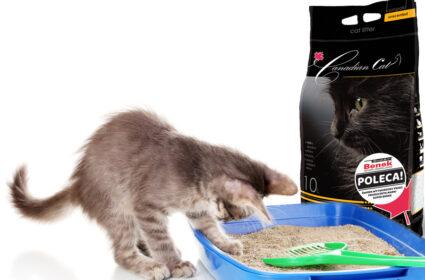 Żwirek bentonitowy canadian cat