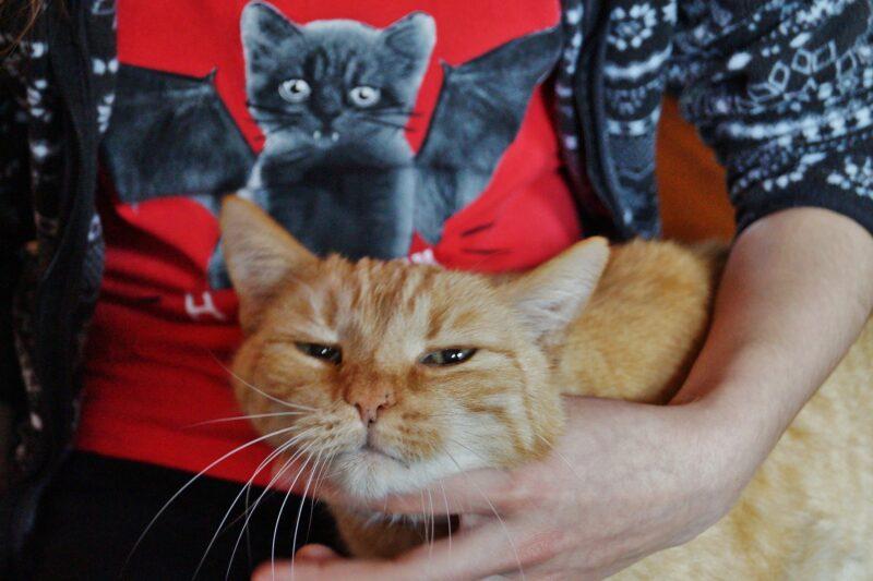 Mruczenie kotów leczy