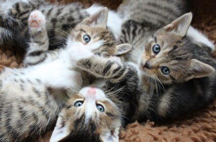 Kot czy kotka? Jak rozpoznać? Jaką płeć wybrać?
