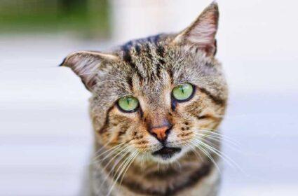 Dlaczego kot wymiotuje? Najczęstsze przyczyny i sposoby pomocy kotu