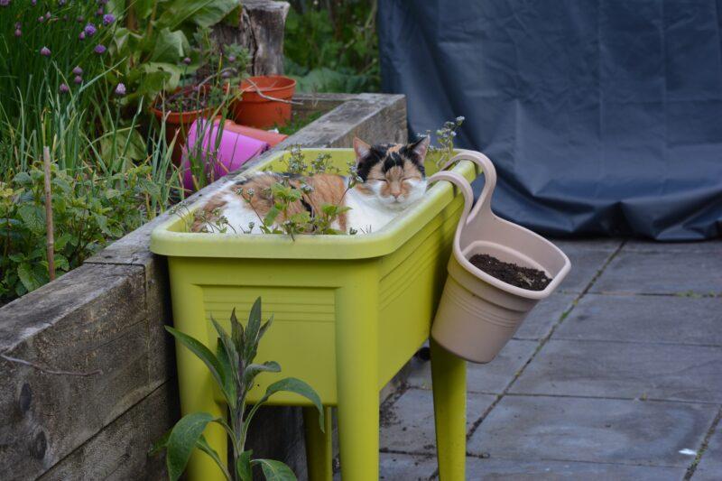 dlaczego kot wymiotuje - zatrucie roślinamu