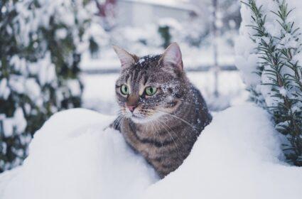 Jak karmić kota zimą?