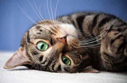 Super Benek Corn Cat żwirek kukurydziany – opinie